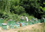 33 pulling first honey of year.jpg