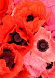 09 market poppies
