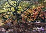 54 fall maple 2013
