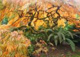 40 orange maple and fern