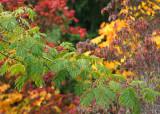 35 green, yellow, red, purple fall