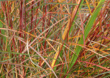 32 the color of fall reeds