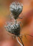 16 seedheads