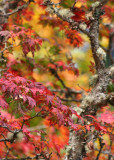 13 richness of fall