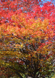 11 rainbow of fall color