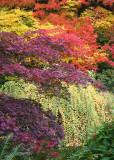 08 cascade of color
