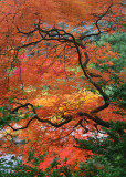 01 fall as a chinese painting