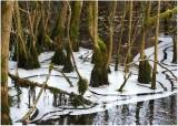 03 wetland woods