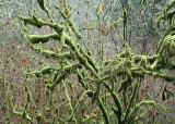 21 moss twigs