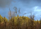 22 winter sky winter trees