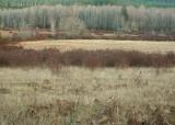 23 winter fields