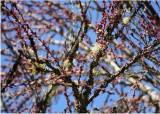 32 blossom buds and lichen