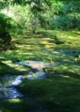 40 spring in the moss garden