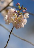 45 blossom and twigs