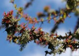 48 lichen and tree flowers