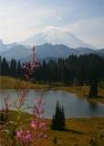 Rainier Visits 2014