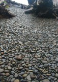 18 pebble path to rialto beach