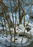 21 snake lake winter twigs
