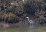 24 heron by the nisqually river