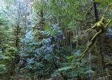 64 carbon river forest