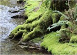 68 mossy river bank