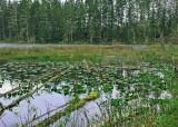 26 howell lake