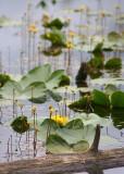 31 howell lake flowers