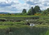 34 wetlands by belfair
