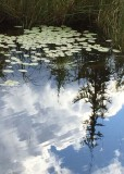 37 pond leaves reflections