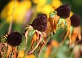 12 flower seed heads
