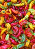 15 tonnemaker peppers
