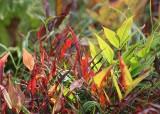 16 fall leaf fire