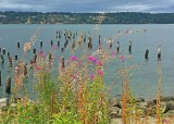 17 last fireweed at titlow park