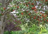 18 early fall berries