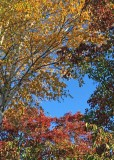 41 fall palette
