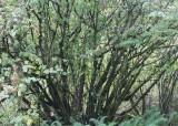 3 alder thicket