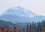79 from enumclaw