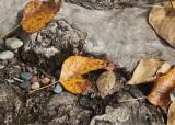 30 wood, leaves, pebbles