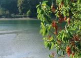 39 chambers creek with madrona