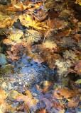 45 floating leaf carpet