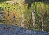 49 reflecting, dewatto river