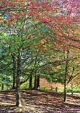 55 an auburn park