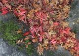 59 leaf river