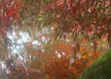 62 maple pond