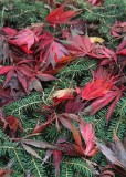74 leaves in the fir