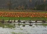 78 november fields
