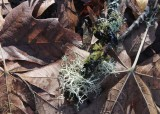 82 leaf mulch