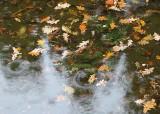 Fall Ponds