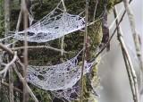 11 web hammocks