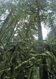 74 moss creatures bow to the very tall tree